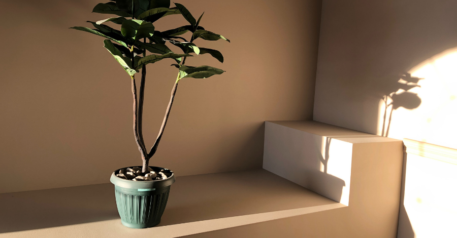 a green plant in a green pot