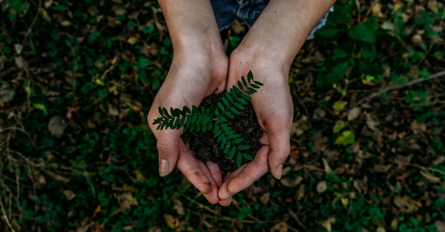 hands with a small green plant